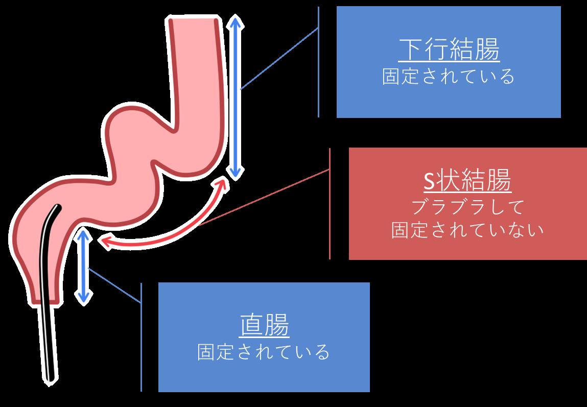 大腸の構造について
